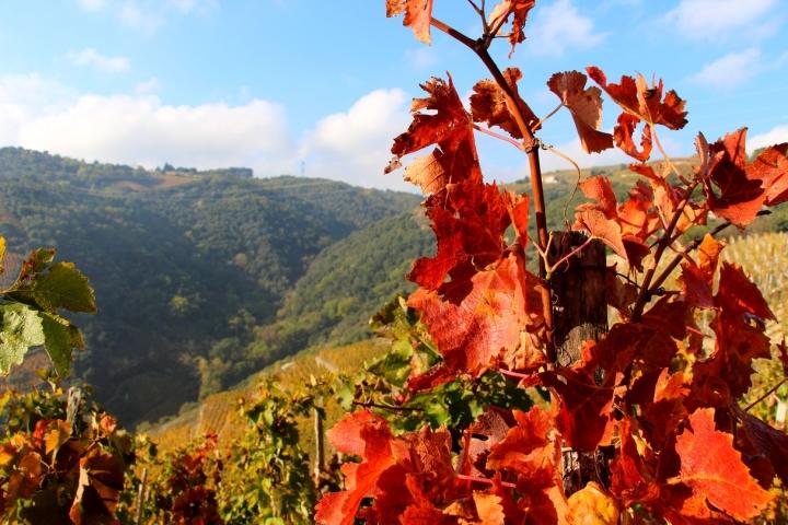 Escapade automnale dans les vignes d'Ardèche.